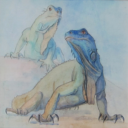 Green Iguana - Watercolour and pencil on paper - 12 ins x 12 ins
